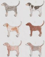 Multiple Coonhound Breeds Imports - Open by Dark-of-Night-Kennel
