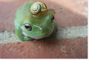 Froggyyyyyyy by photographiclove162