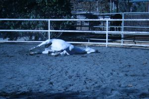 gray horse stock 5 by xbr0kendevotion