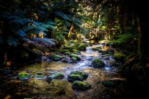 Mossy Creek by Questavia