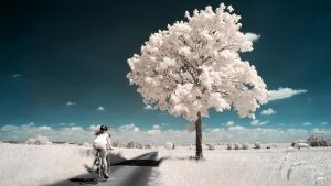 White Trees Part II by myINQI