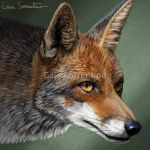 Fox icon by makangeni
