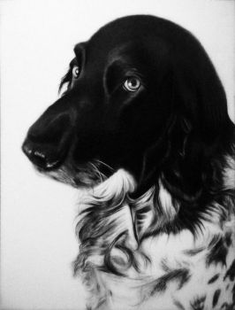 Abby - Pencil Drawing by Names76