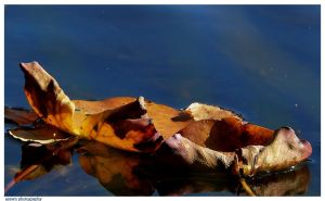 Brown are The leafs of a summer Past by Arawn-Photography