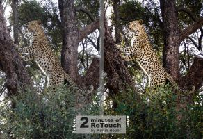 Leopard in tree 2Minute Retouch by kerimheper