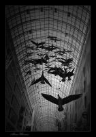 Fly Forever by alireza1