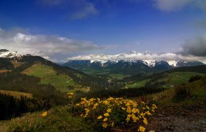 Alpine spring 2009 by mutrus