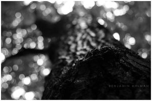 Tree From Frogs Perspective by BAproductions