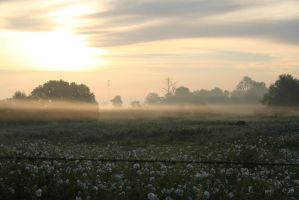 Misty Flower Field by JubileeStock