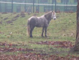 Equine 0047 by 0readytofall0