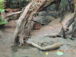 Red  Footed  Tortoise by tabby25