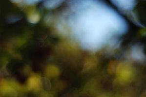 Lively Bokeh by redwolf518stock