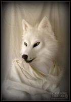 White Wolf - April Sale by Qarrezel