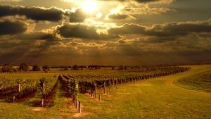 The Vineyard by chumly12