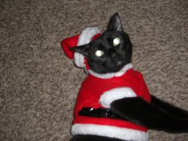Harry: Santa Declawed by brandi3981