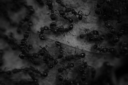 ants by CountFranklin