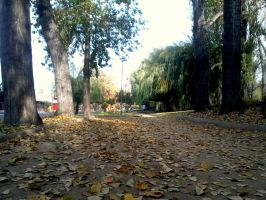 leaves's foliage by SoundLess090voice
