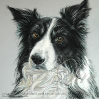 Dog Pet Portrait 'Max' by LouiseMarieFineArt