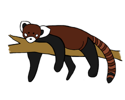 Red panda by AndujarA