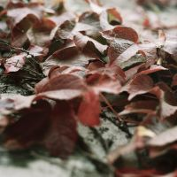 Leaves on the Wall by MAC81688
