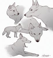 wolf practice by msshanh