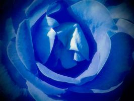Blue rose by Andrex91