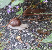 Mollusc convention 2 by Kattvinge
