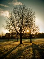 Tree at dawn STOCK by needanewname