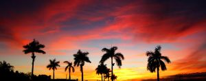 Palm Trees by plastikphotos