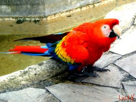 Colorful Parrot by LuckX