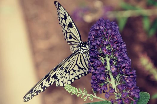Butterfly Wonderland by hell0z0mbie