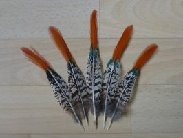 Lady Amherst's Pheasant feathers by Aewendil