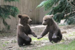 Bear cubs 6 by Linay-stock