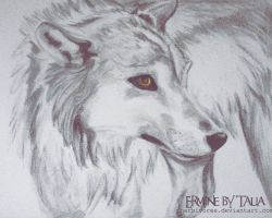 Charcoal Wolf by Herbivoree
