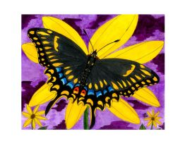 The Black Swallowtail Butterfly by RainbowFay