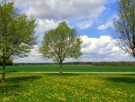 springtime tree by Mittelfranke