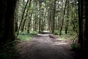 Olympic National Forest by augustmobius