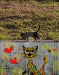 cat pop by jeankeize