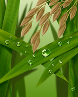 Dew Drops And Rice Grains by Reiman76