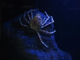 Crab 1 -- Sept 2009 by pricecw-stock