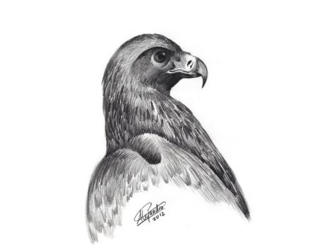 Eagle by soulevans93
