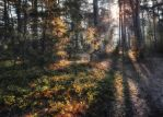 Dawn in the wood in the lokhinsky reserve by hitforsa