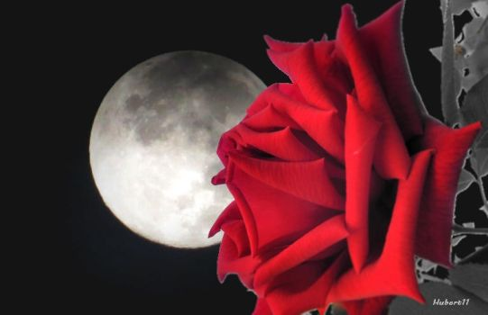 Moon and Rose by Hubert11