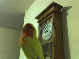 My lovebird.......and clock... by NoushinNienor