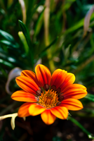 Flower 01 by LapinBlancFR