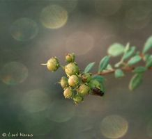 Unborn - bokeh by uae4u