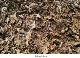 forest floor texture stock 3 by Rainny-Stock
