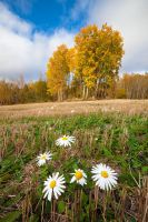 Flowers by juhku