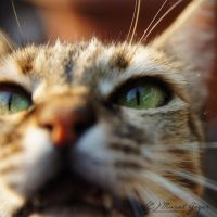 Street Cats: Eye Contact by MuratGezer