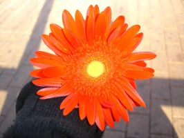 be my flower. by insomniana